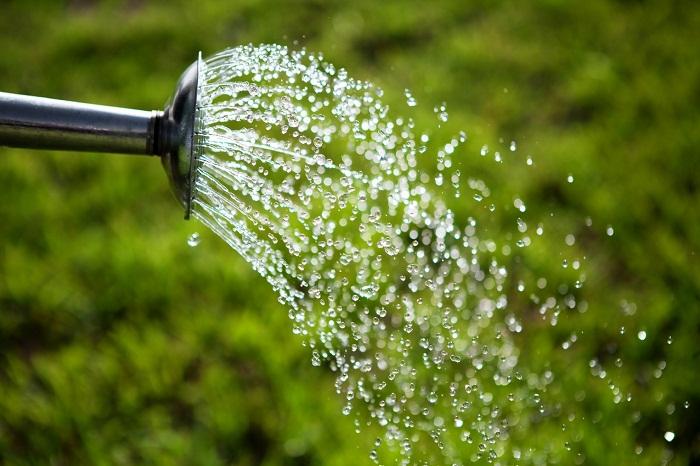 Способы полива кустарника