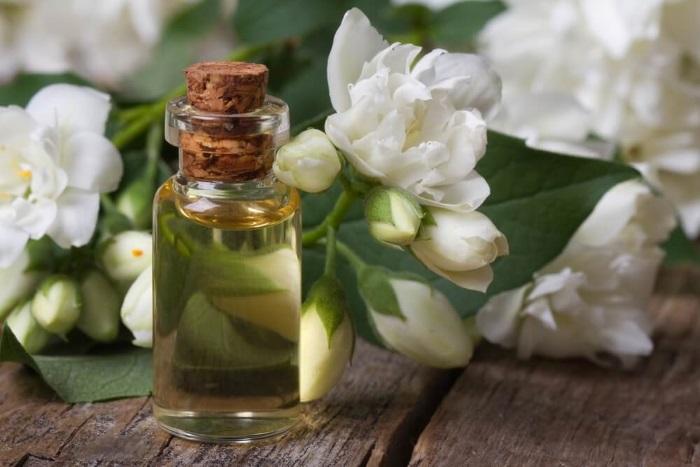 Лечебные свойства жасмина