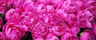 Отсутствия цветения