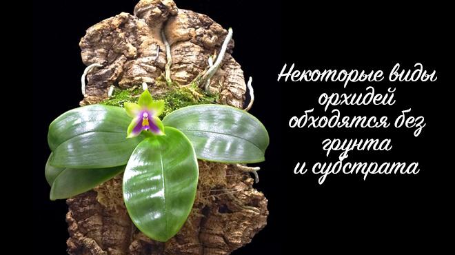 Как сделать грунт для орхидеи своими руками - состав и пропорции