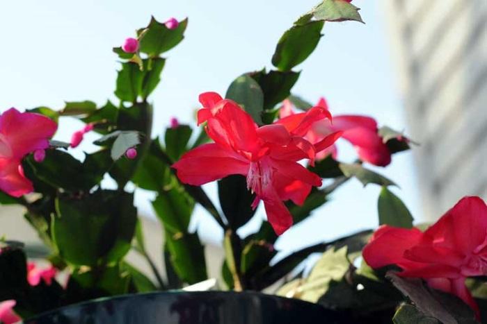 Уход за цветком
