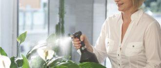 Обрызгивать растение