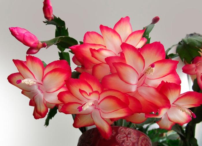 Цветет в зимнее время