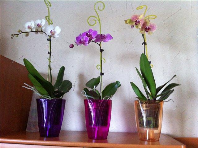 горшки для орхидей какие должны быть фото чём