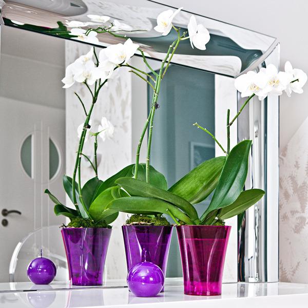 какие горшки нужны для орхидей фото враги правят