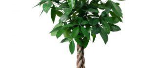 Тропические растение