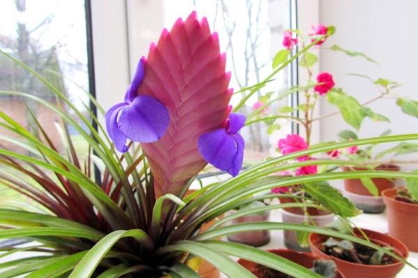 Растение принадлежит к однолетникам