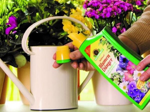 Весной внести больше азота
