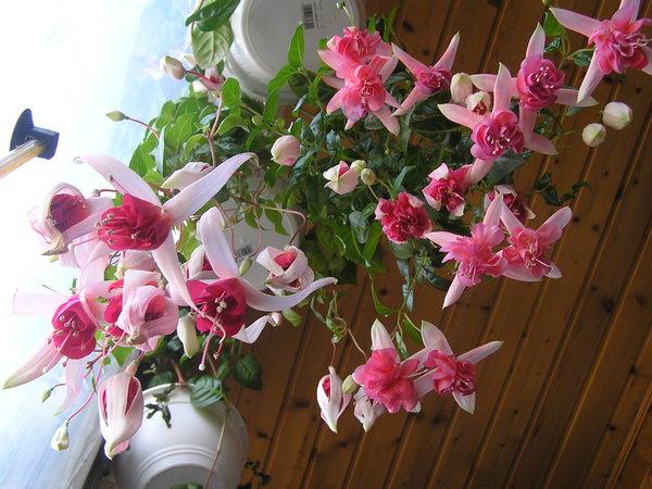 Для пышного цветения