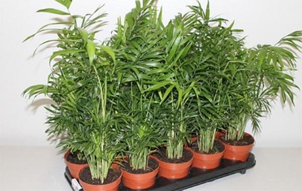 Внимательно осмотрите растение