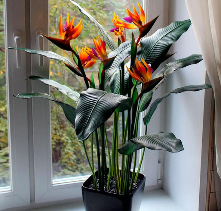 Стрелиция - посадка, уход и размножение цветка в домашних условиях. Особенности внешнего вида