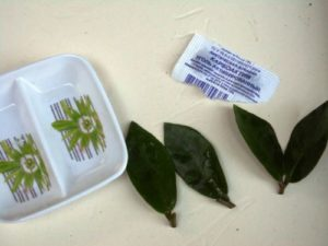 Замиокулькас: размножение листом в воде, в грунте, пошагово