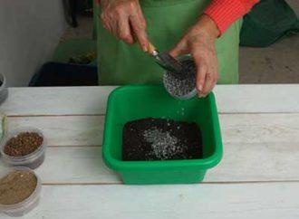Грунт для замиокулькаса: какой лучше, состав, как сделать своими руками