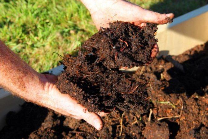Удобрение для фикуса: для густоты, для роста, чем подкормить весной, осенью