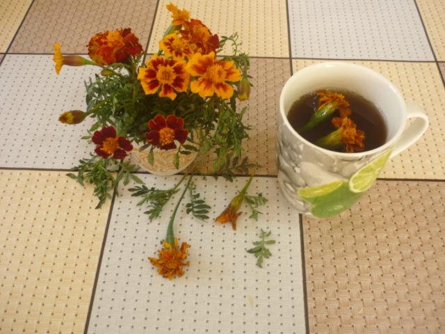 Чай из бархатцев: в чем польза и вред для организма, как приготовить и пить